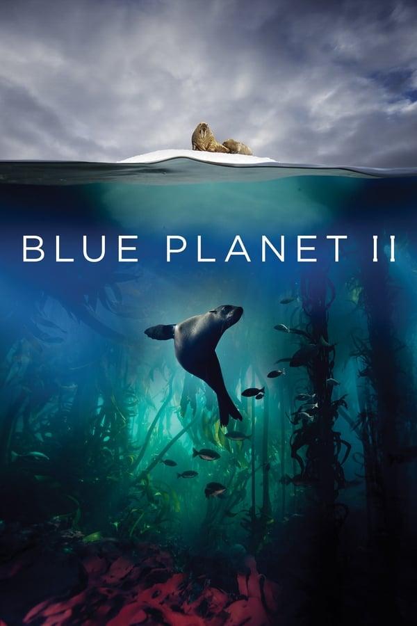 ცისფერი პლანეტა 2 / Blue Planet II