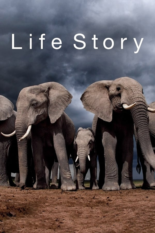 ცხოვრების ისტორია / Life Story
